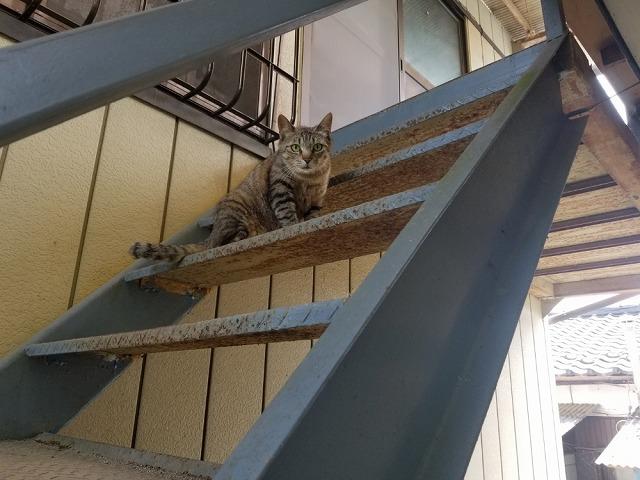鉄骨階段です