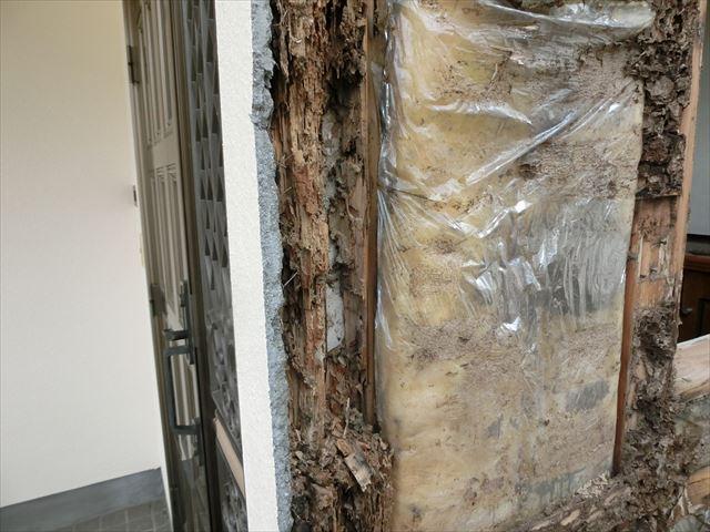雨漏り箇所を解体しました 白蟻がいます
