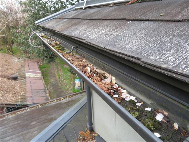 雨樋の枯葉