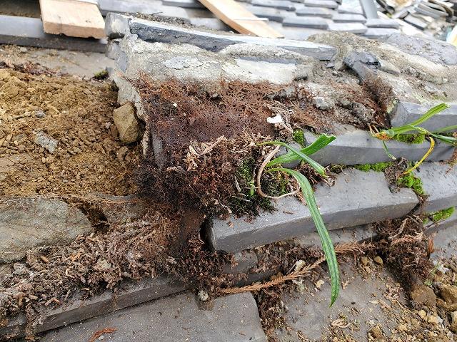 下り棟の撤去します。 草が生えています