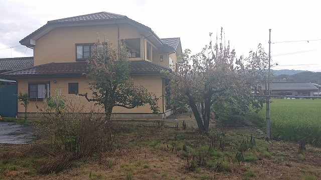 飯田市駄科 アメシロ被害にて柿の木の伐採工事を行います。現地調査