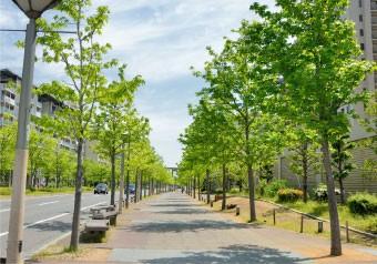 緑が多く整備された歩道